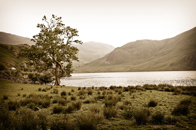A lone Tree at Crummock Water, Cumbria, Lake District, by DaveBulow