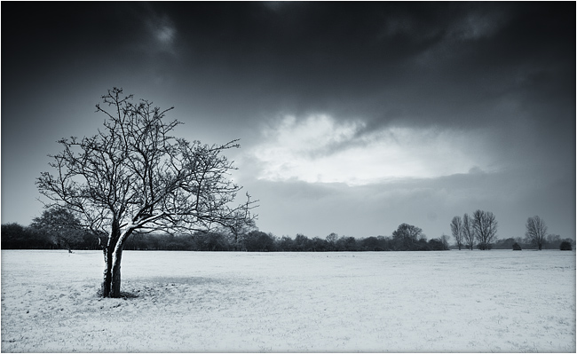 Lone Tree, Flatford, in the snow, by DaveBulow