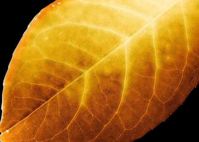 A Leafy Virus -  Macro Photography by DaveBulow Ipswich