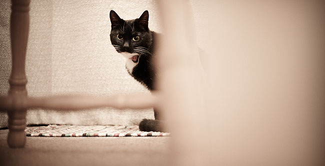 Sushi Behind Table, Pet Portraiture, by DaveBulow