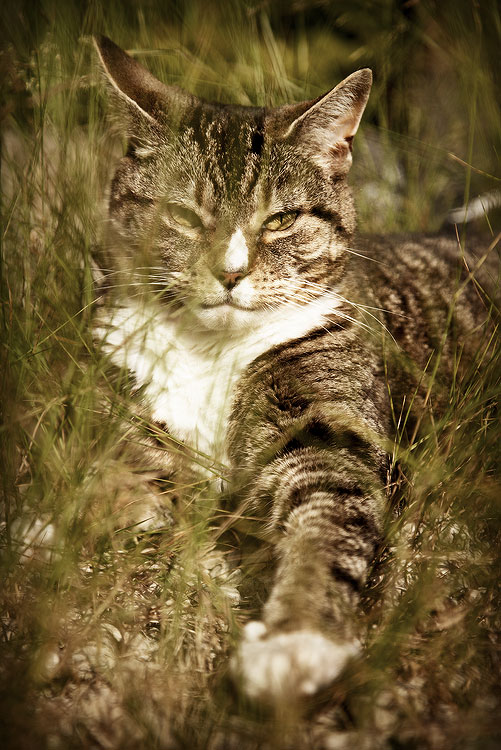 Tigger the Cat, by DaveBulow